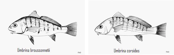 Source image: FAO on Fishwise