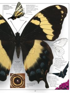 eyewitness-books-butterfty-moth-28-638
